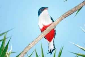 national-bird-cuba